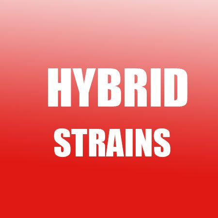 buy-hybrid-cannabis-online-australia