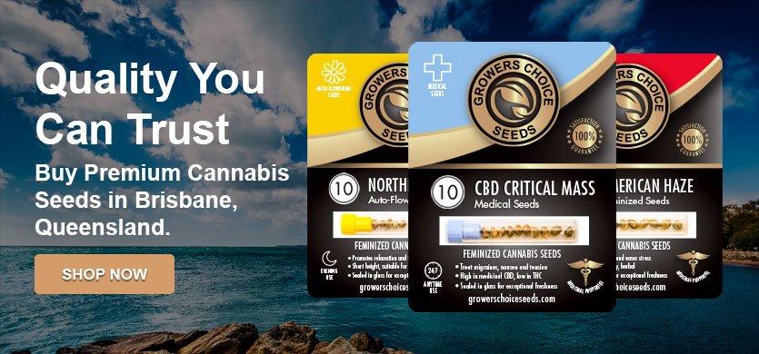 Buy Marijuana Seeds Online Brisbane